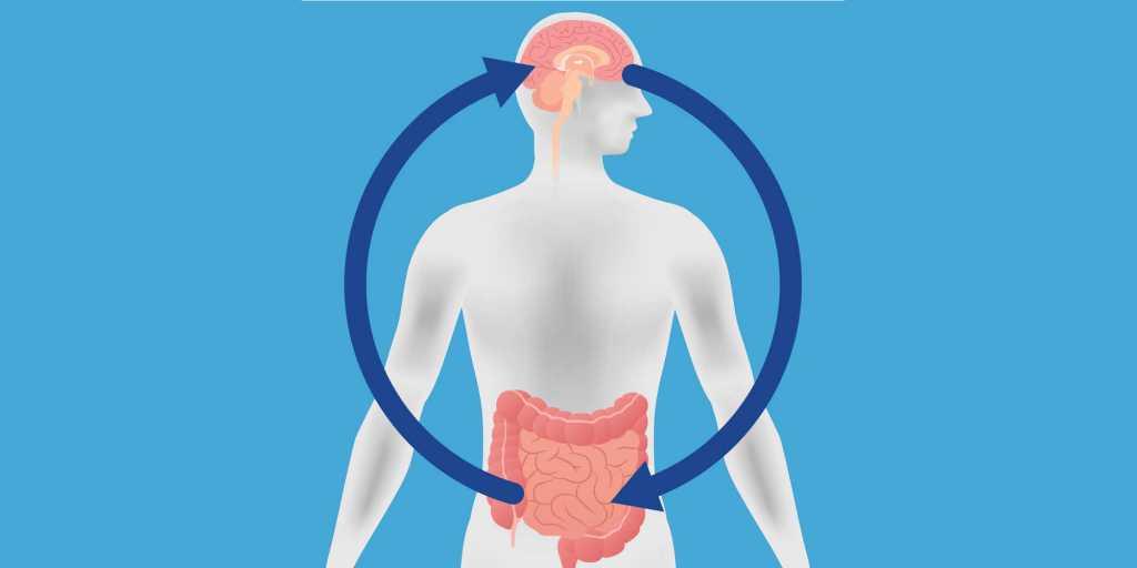 Intestin, cerveau et prise de poids
