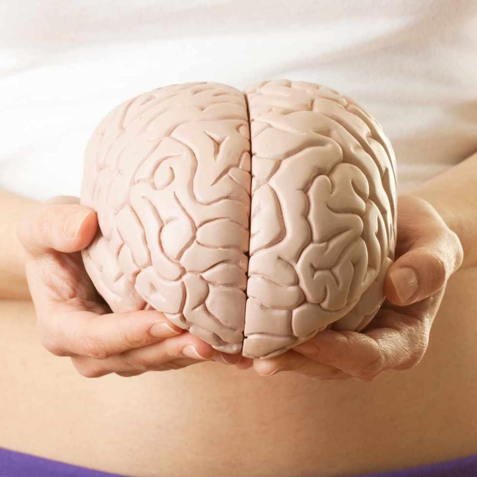 Comment la santé de l'intestin influe sur la santé du cerveau
