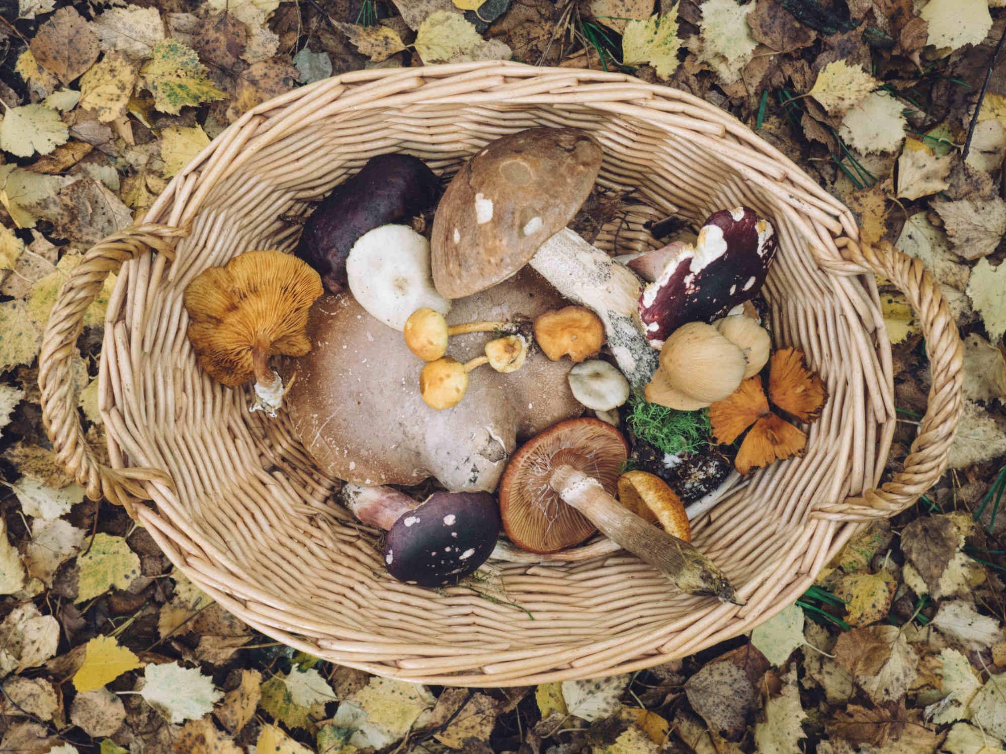 Vertus des champignons pour la prostate