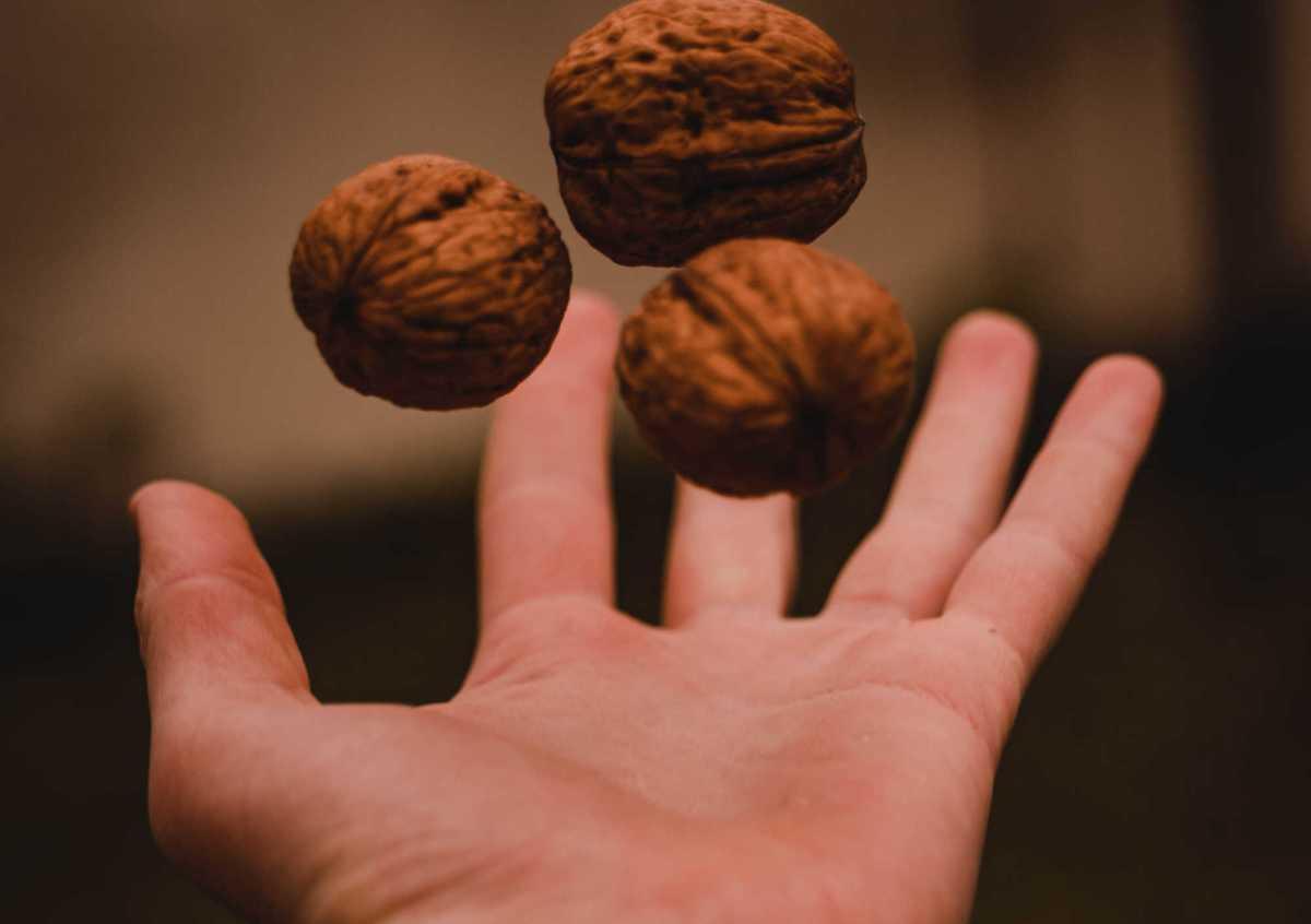 Pourquoi les noix sont bonnes pour la santé intestinale et cardiaque ?