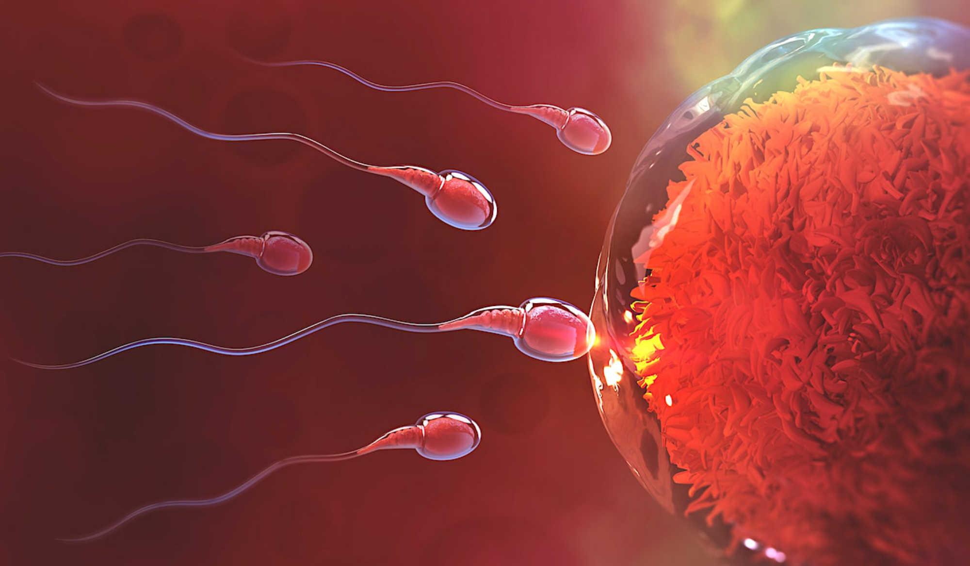 Phénomènes épigénétiques et sperme